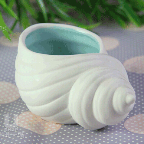 海螺卷贝贝壳储物罐