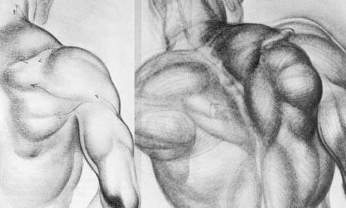 角色肌肉maya建模教程高清图片
