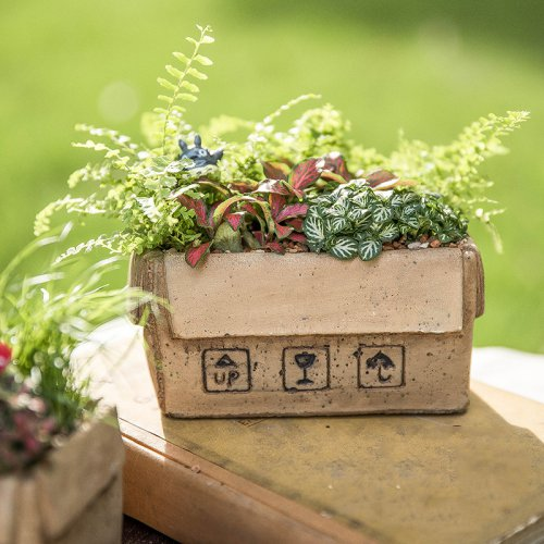 创意仿纸皮箱系列小盆多肉植物花盆桌面摆设