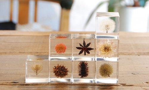 宙sola 日本创意礼物 蒲公英植物标本摆件