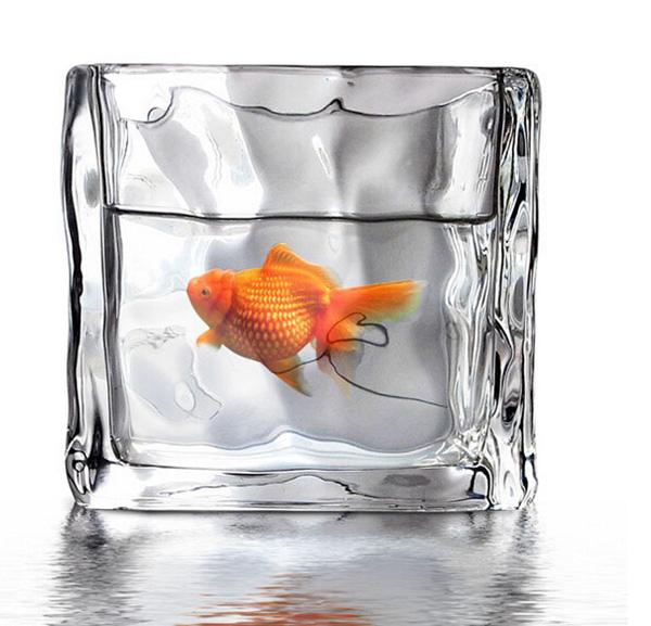 创意冰块鱼缸1