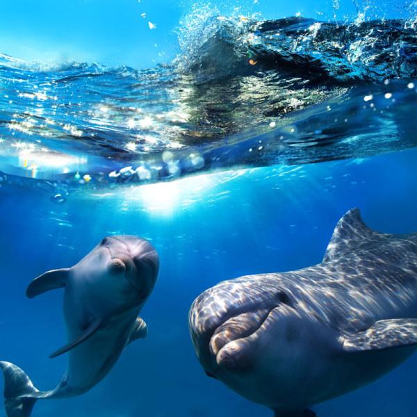 [素材下载]高清海洋生物10-高清图片